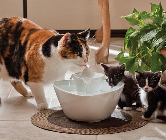 Поилка для кошек своими руками