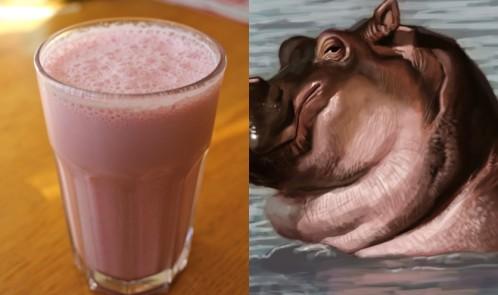 Su Aygırının Sütünün Pembe Renkli Olduğunu Biliyor muydunuz?